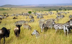 africa singles safari and singles hiking kilimanjaro adventure tour