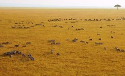africa singles safari vacation in serengeti