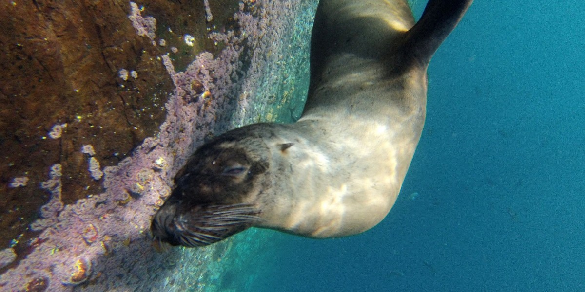 sea lion galapagos singles trip