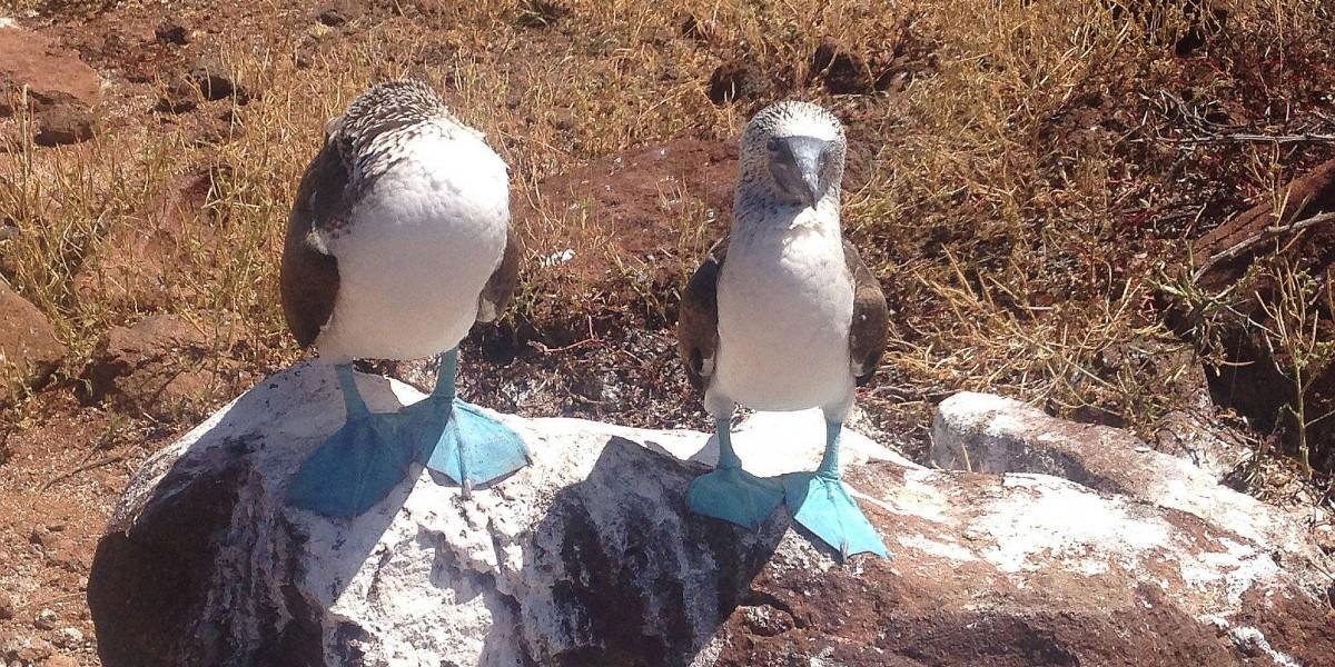 seymour birds galapagos singles trip