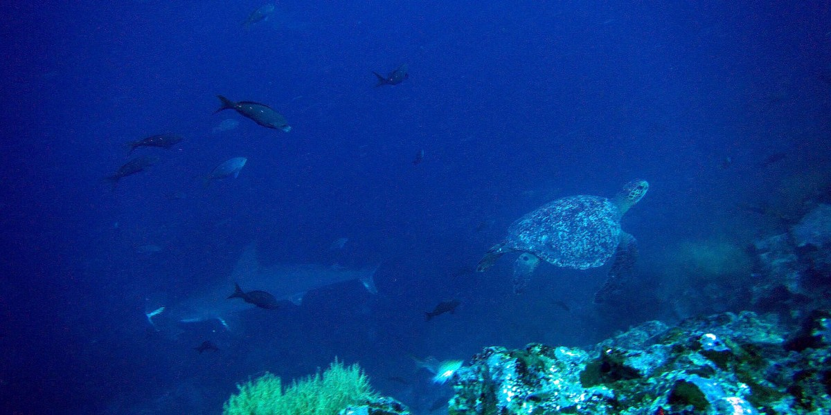 galapagos singles scuba diving trip shark and turtle