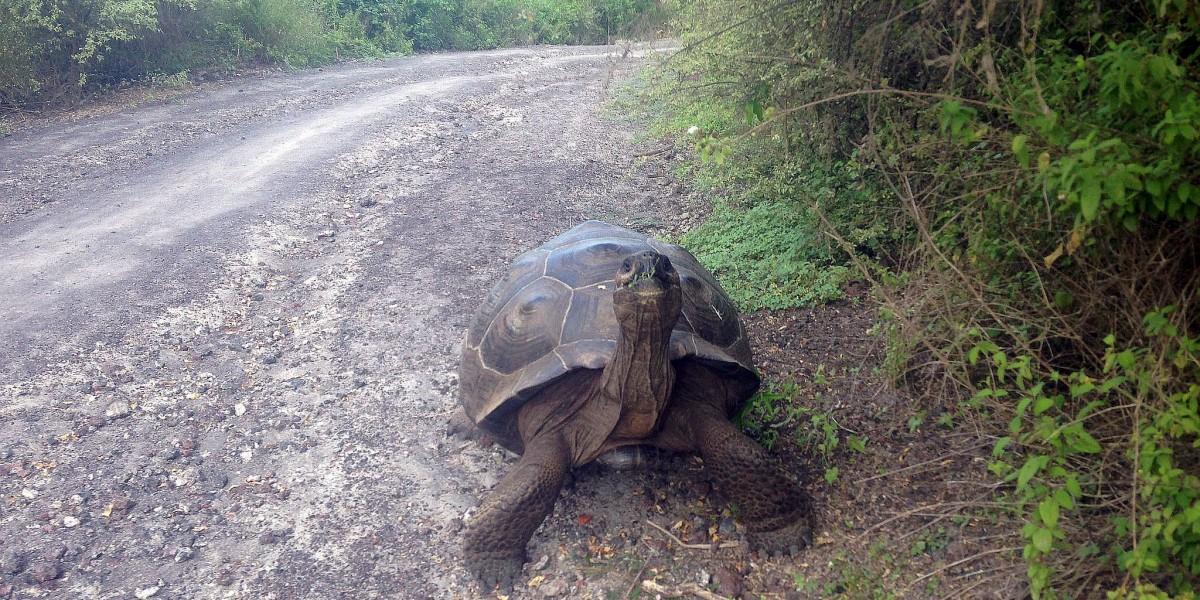 turtle galapagos singles tour eriks adventures