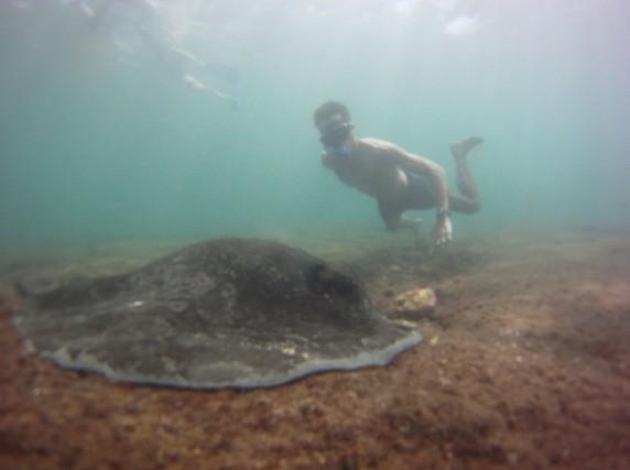 Diving Kicker Rock Galapagos